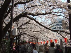 目黒川お花見2012