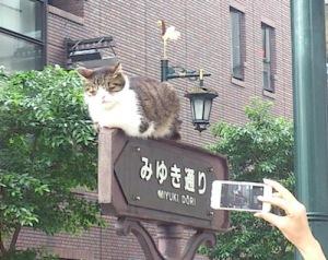 銀座路地裏9三越のネコ再び